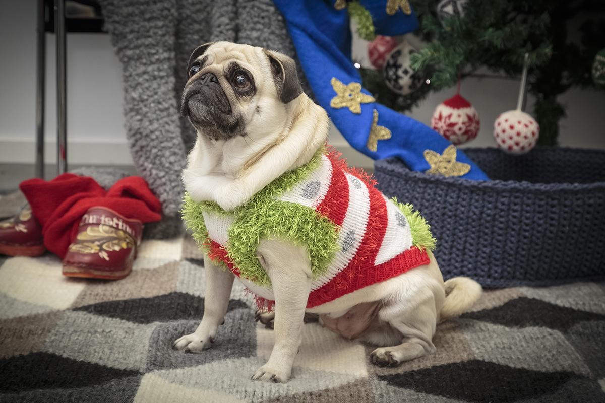 Jultröja till hunden
